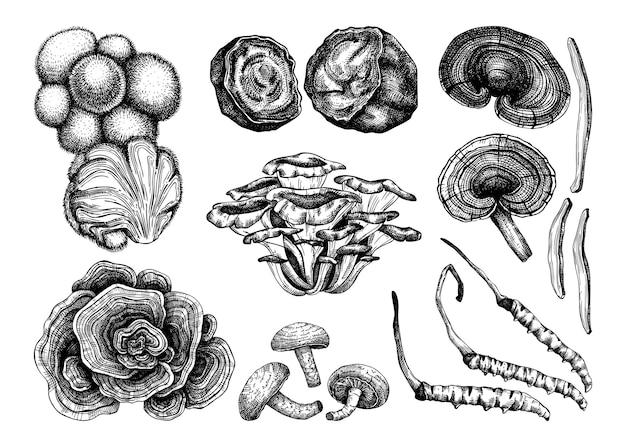 Kolekcja ilustracji grzyby lecznicze. szkice roślin adaptogennych.