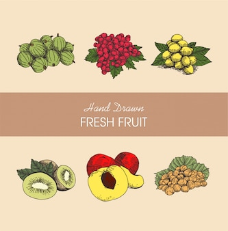 Kolekcja ilustracji owoców