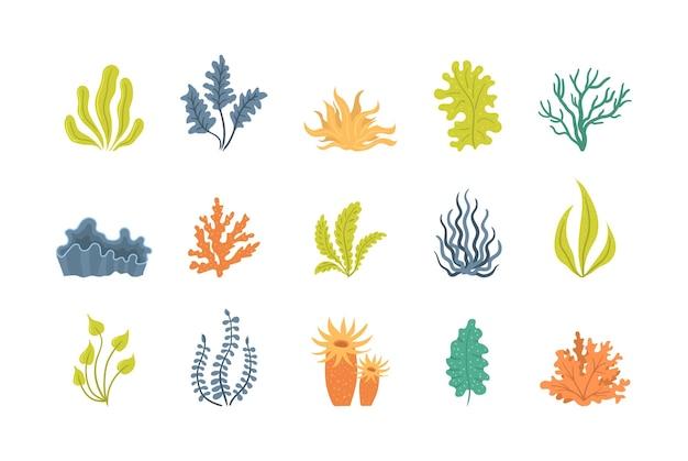 Kolekcja ilustracji wodorostów