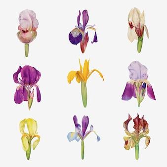 Kolekcja Ilustracji Z Kwiatów Tęczówki W Stylu Vintage Darmowych Wektorów