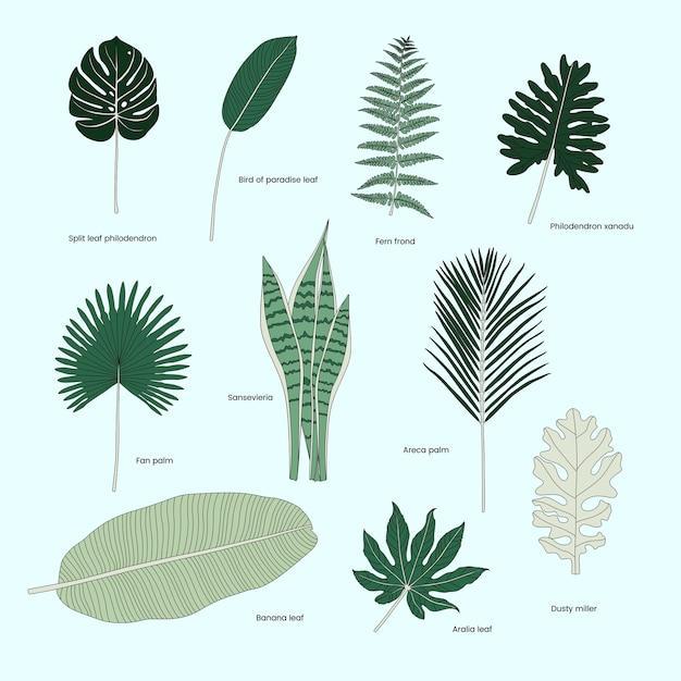 Kolekcja ilustrowanych tropikalnych liści