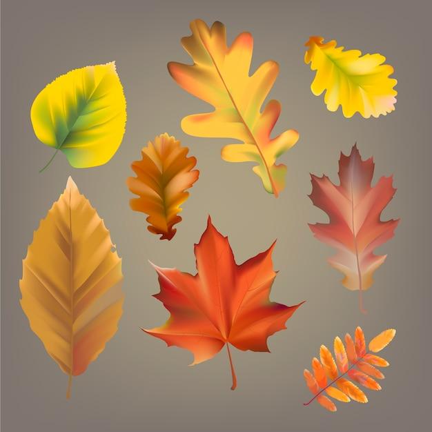 Kolekcja jesień liść wektor