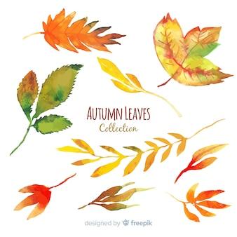 Kolekcja jesień styl akwarela liście