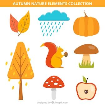 Kolekcja jesiennych elementów z wiewiórki
