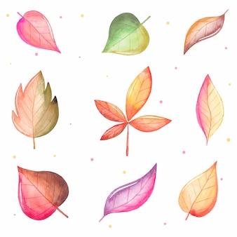 Kolekcja jesiennych liści akwarela