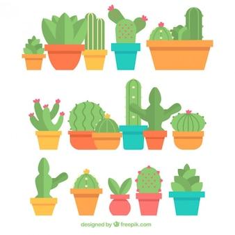 Kolekcja kaktus w doniczce płaskiej konstrukcji