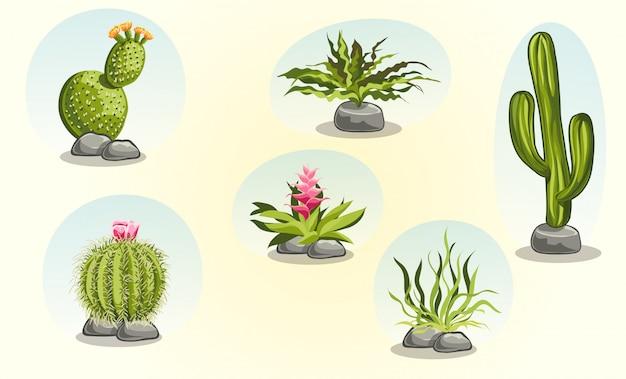 Kolekcja kaktusów i roślin pustynnych