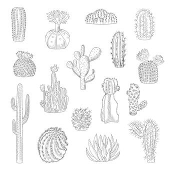 Kolekcja kaktusów na białym tle na jasnym tle w stylu wyciągnąć rękę. zestaw dzikich kaktusów w stylu szkicu. soczyste rośliny pustynne. grawerowanie rocznika. ilustracja wektorowa.