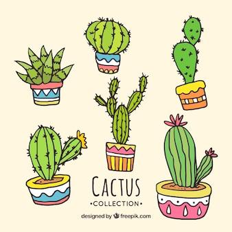 Kolekcja kaktusów ręcznie