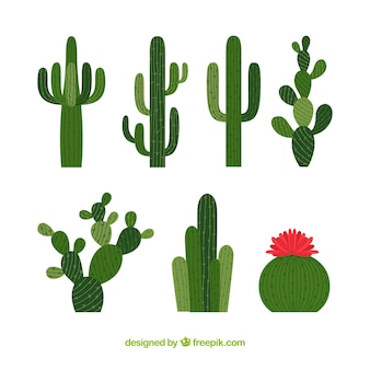 Kolekcja kaktusów wysokich