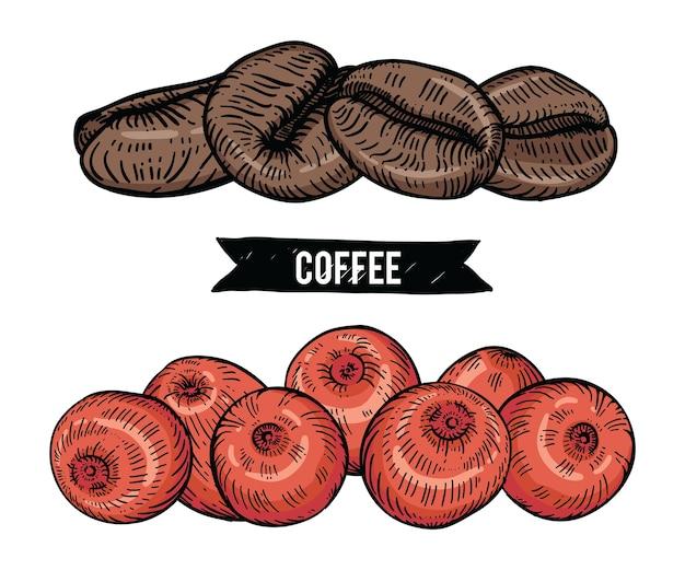 Kolekcja kawy z fasoli i jagód