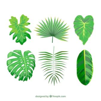 Kolekcja kolorowy liść tropikalny z płaska konstrukcja
