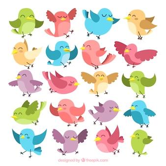 Kolekcja kolorowych ptaków