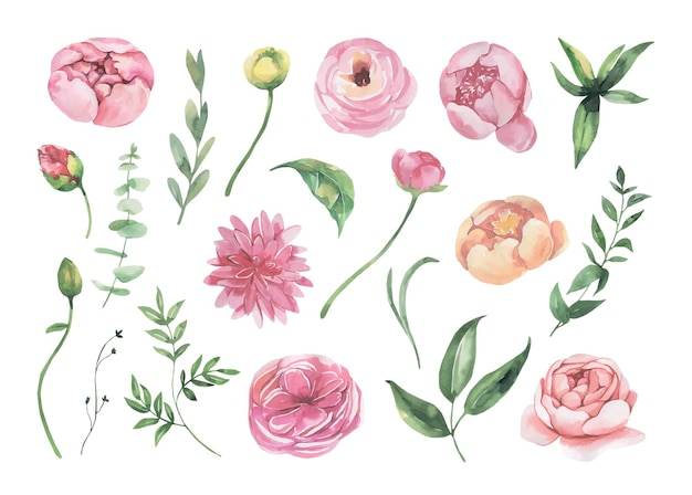 Kolekcja kwiatów akwareli