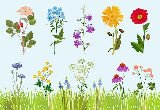 Kolekcja kwiatów. botaniczne dzikie rośliny polne łąka rysunek w stylu cartoon.