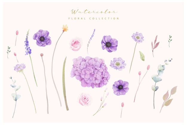 Kolekcja kwiatów hortensji i ukwiałów