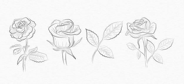 Kolekcja kwiatów i liści róży