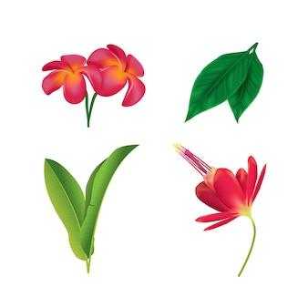 Kolekcja kwiatów i liści w tropikalnym stylu