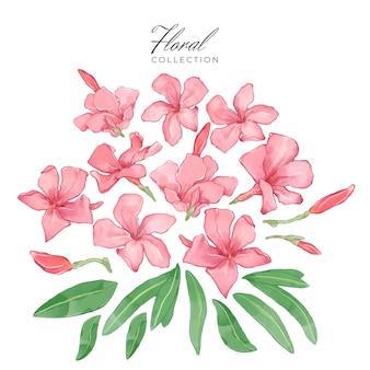 Kolekcja kwiatów oleandrów
