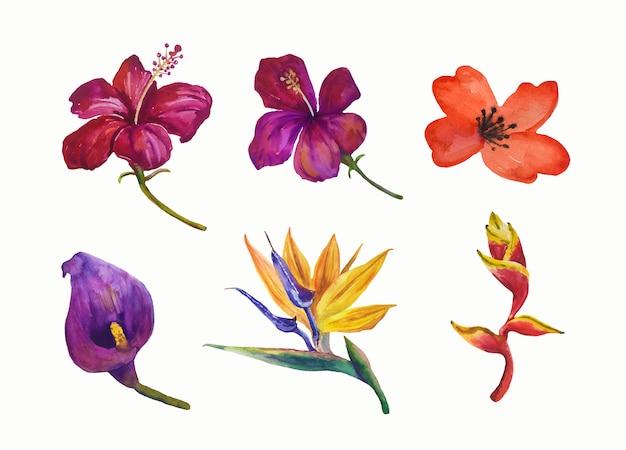 Kolekcja kwiatów tropikalnych.