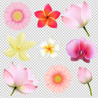 Kolekcja kwiatów w przezroczystym tle siatki gradientu, ilustracja
