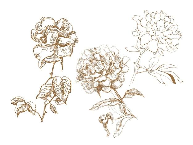 Kolekcja kwiatowa. ilustracje ręcznie rysowane