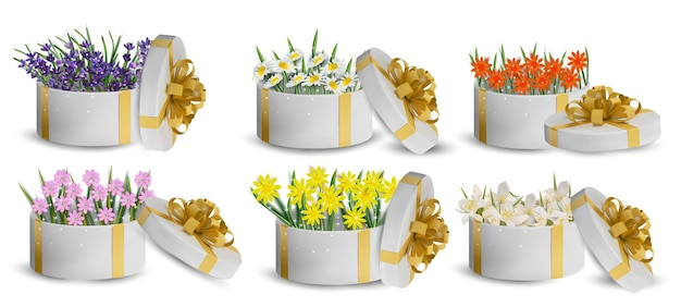 Kolekcja kwiatowa w pudełku prezentowym. kwiat lawendy, rumianku, jaśminu. ilustracja.