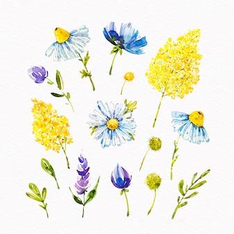 Kolekcja kwitnących kwiatów akwarela wiosna
