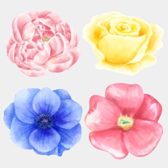 Kolekcja kwitnących kwiatów akwareli