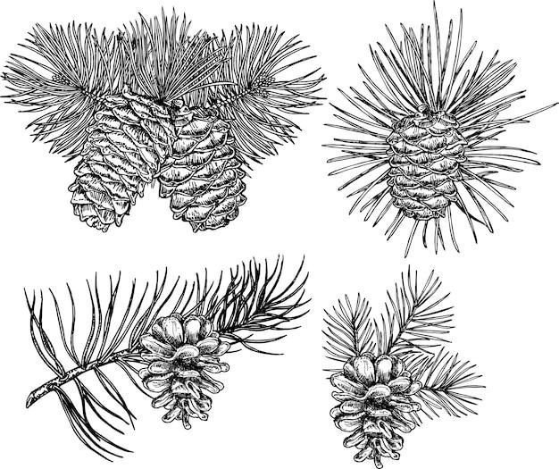 Kolekcja lasów iglastych gałęzi i szyszek na białym tle. szkic szyszki jodły.