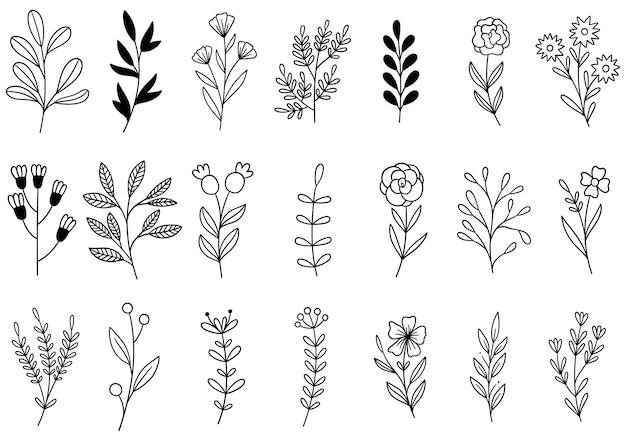 Kolekcja lasów paproci eukaliptus sztuki liści naturalne liście zioła w stylu linii.
