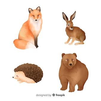 Kolekcja leśnych zwierząt akwarelowych