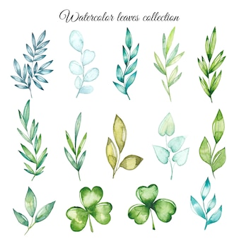 Kolekcja liści akwarela