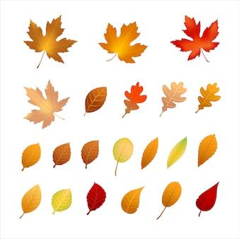 Kolekcja liści jesienią