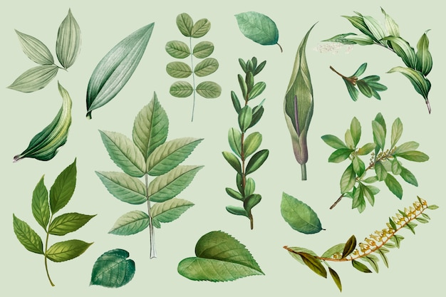 Kolekcja liści roślin