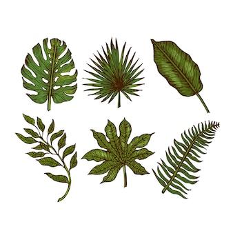 Kolekcja liści tropikalnych. grawerowane liście dżungli. liście palmowe.