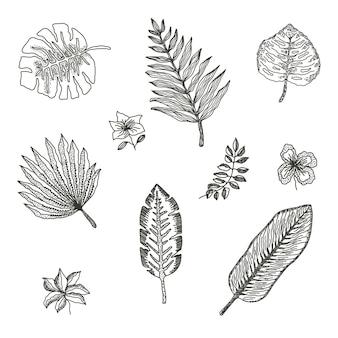 Kolekcja liści tropikalnych z czarnym konturem