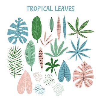 Kolekcja liści tropikalnych