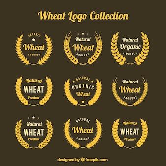Kolekcja logo pszenicy płaskiej