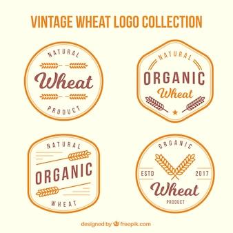 Kolekcja logo rocznika pszenicy