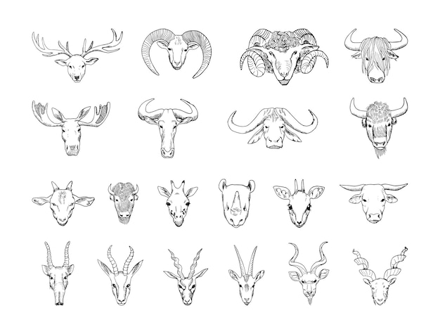 Kolekcja monochromatycznych głów zwierząt z rogami w stylu szkicu