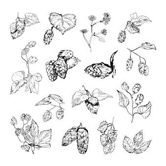 Kolekcja monochromatycznych ilustracji chmielu w stylu szkicu