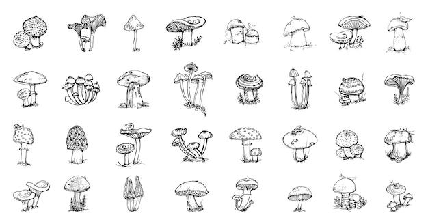 Kolekcja monochromatycznych ilustracji grzybów w stylu szkicu