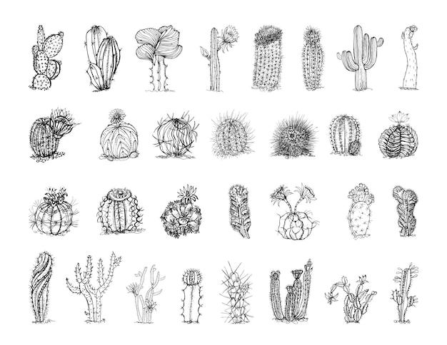 Kolekcja monochromatycznych ilustracji kaktusów w stylu szkicu
