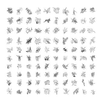 Kolekcja monochromatycznych ilustracji z gałązkami w stylu szkicu