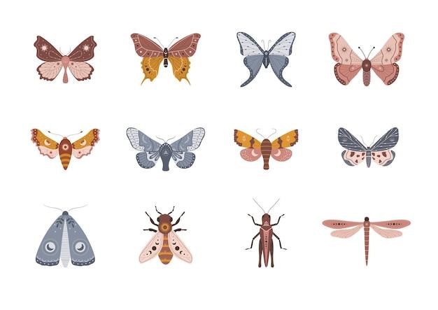 Kolekcja motyli w stylu cyganerii.