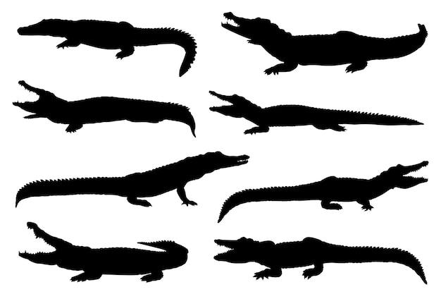 Kolekcja na białym tle sylwetki krokodyla w różnych pozach.