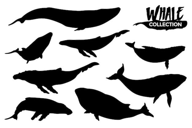 Kolekcja na białym tle sylwetki wielorybów. zasoby graficzne.
