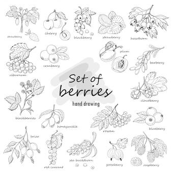 Kolekcja ogród i dzikie jagody w stylu szkicu