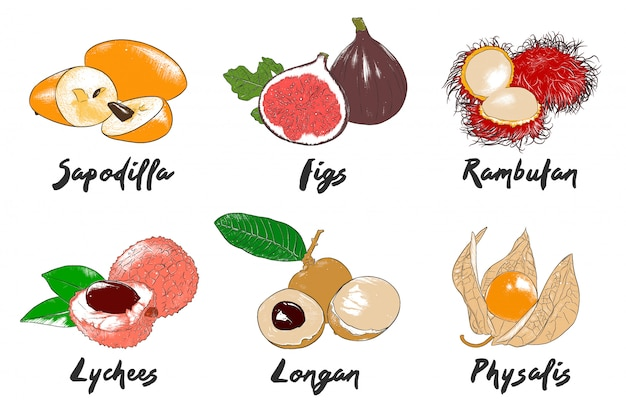Kolekcja organicznych owoców egzotycznych w grawerowanym stylu